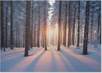 Sunset in the woods in winter Poster