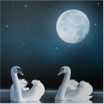 Poster Svanar på sjön på natthimlen.