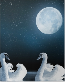 Swans on the lake in the night sky. Poster