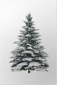 Tanne im Schnee Poster