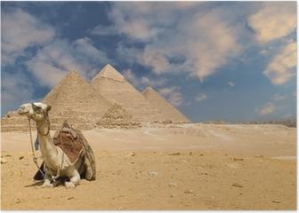 the pyramids camel Poster