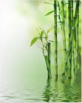 Poster Tiges de bambou sur l'eau