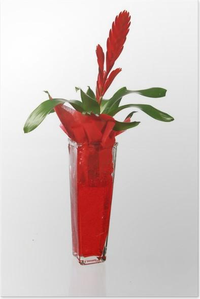 Poster Tiilandsia Cyanea Fleur Rouge Pixers We Leven Om Te