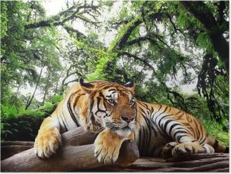 Poster Tijger op zoek naar iets op de rots in tropische altijdgroene bos
