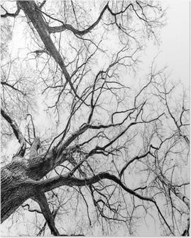 Poster Träd