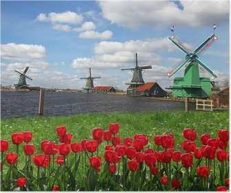 Traditional Dutch windmills with red tulips,Amsterdam, Holland Poster