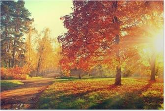 Trees in the autumn sun light Poster
