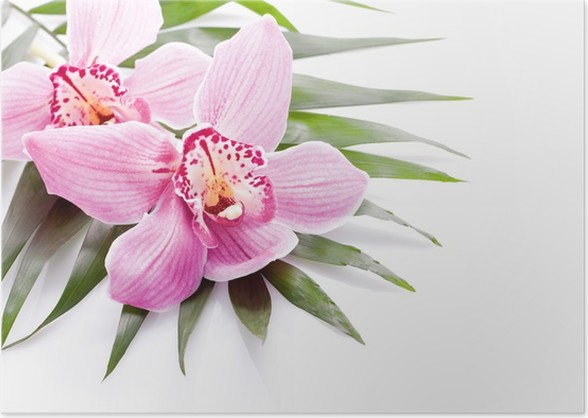 Tropical pink orchid plant flower on green leaf poster pixers tropical pink orchid plant flower on green leaf poster mightylinksfo