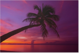 Tropical sunset with palm tree silhoette at beach Poster