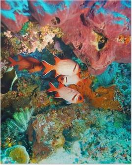 Poster Tropische vissen in de buurt van Kleurrijke Coral Reef