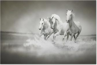 Poster Troupeau de chevaux blancs qui traverse l'eau