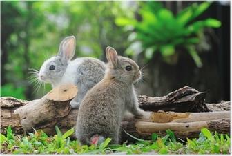 Poster Twee konijnen bunny in de tuin