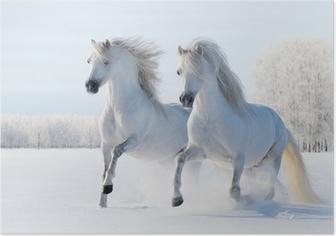 Poster Twee witte paarden in galop in de sneeuw