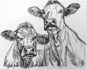 two cows - black and white sketch Poster