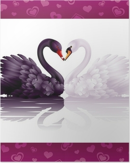 Two graceful swans in love: black-and-white heart Poster