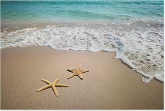 two starfish on a beach Poster