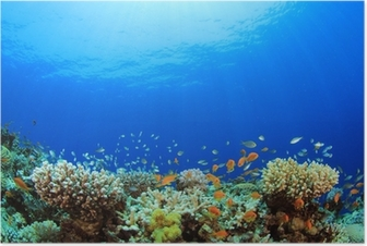 Underwater Coral Reef and Tropical Fish Poster