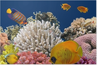 Underwater life of a hard-coral reef, Red Sea, Egypt Poster