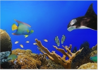 Underwater tropical reef panorama Poster