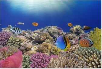 Underwater world. Coral fishes of Red sea. Poster