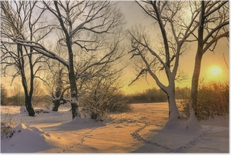 Poster Vacker vinter solnedgång med träd i snön