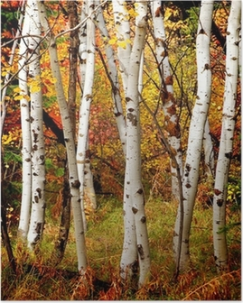 Poster Vallen van de Bomen