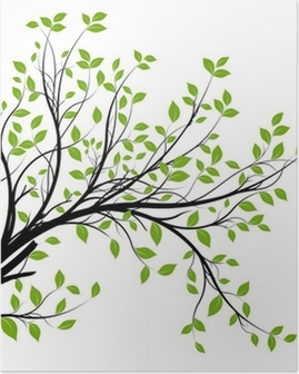 vector set - green decorative branch and leaves Poster