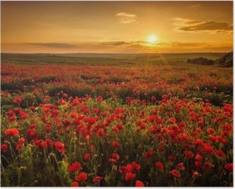 Poster Veld met klaprozen tijdens zonsondergang