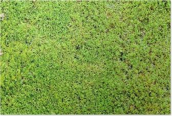 Póster Verde musgo fondo