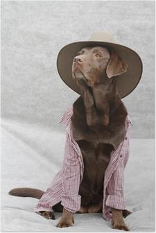 Poster Verkleideter Labrador