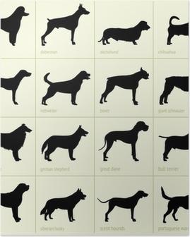 Poster Verschillende rassen van honden