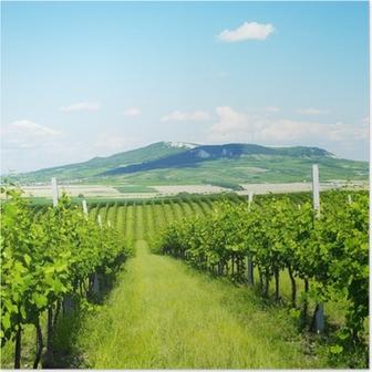 vineyards, Palava, Czech Republic Poster