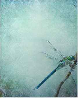 Vintage shabby chic background with dragonfly Poster