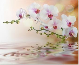 Poster Vita orkidéer på vatten med droppe