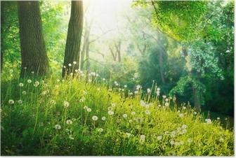 Poster Voorjaar Nature. Mooi Landschap. Groen gras en bomen