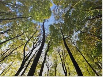 Poster Vue du ciel dans la forêt