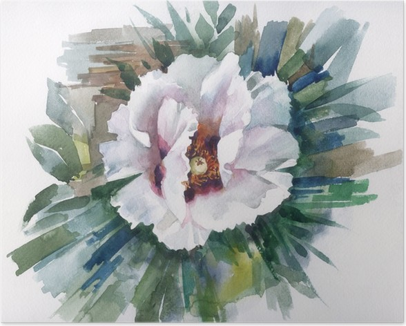 Watercolor Flower Collection: White Poppy Poster • Pixers® • We live ...