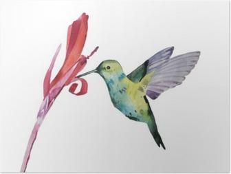 watercolor illustration, colobri Poster