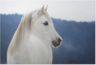 Poster Weiße Vollblut Araber Stute im Schnee