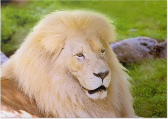White Lion Poster Themes