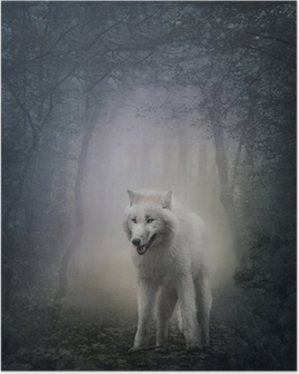 Poster White wolf