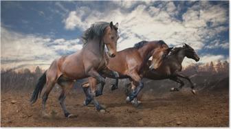Poster Wilde springen baai paarden