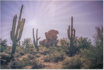 Poster Woestijn keien saguarocactus boom landschap