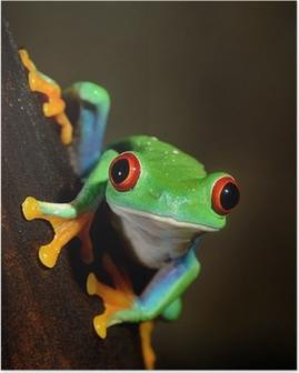 Poster Yeux rouges grenouille grenouille aux yeux rouges dans le terrarium