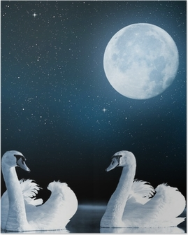 Poster Zwanen op het meer in de nachtelijke hemel.