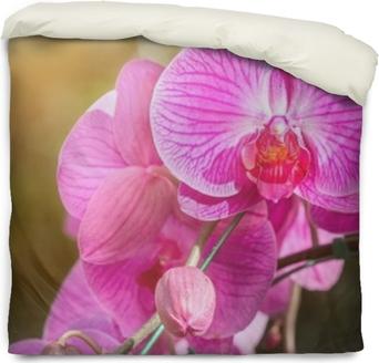 Povlak na přikrývku Orchidej květ v zahradě v zimě nebo jarní den pro pohlednice krása a zemědělství nápad design koncepce. orchideje jsou produkty vývozu z Thajska, které dělají spoustu peněz.