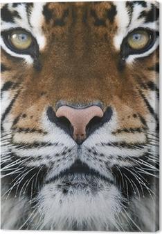 a tiger Premium prints