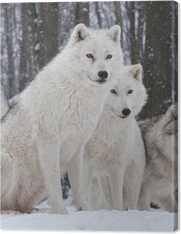 Arctic Wolf Pack Premium prints