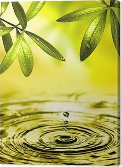 Blätter hängen über Wasser Premium prints