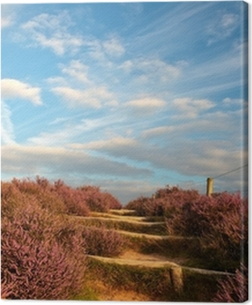 Blooming heathland with hiking trail at the Veluwe in Holland Premium prints